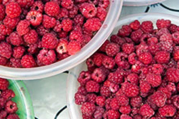 פירות יער מתוקים בשוק של אוש בבישקק, קירגיזסטן. צילום: עודד וגנשטיין
