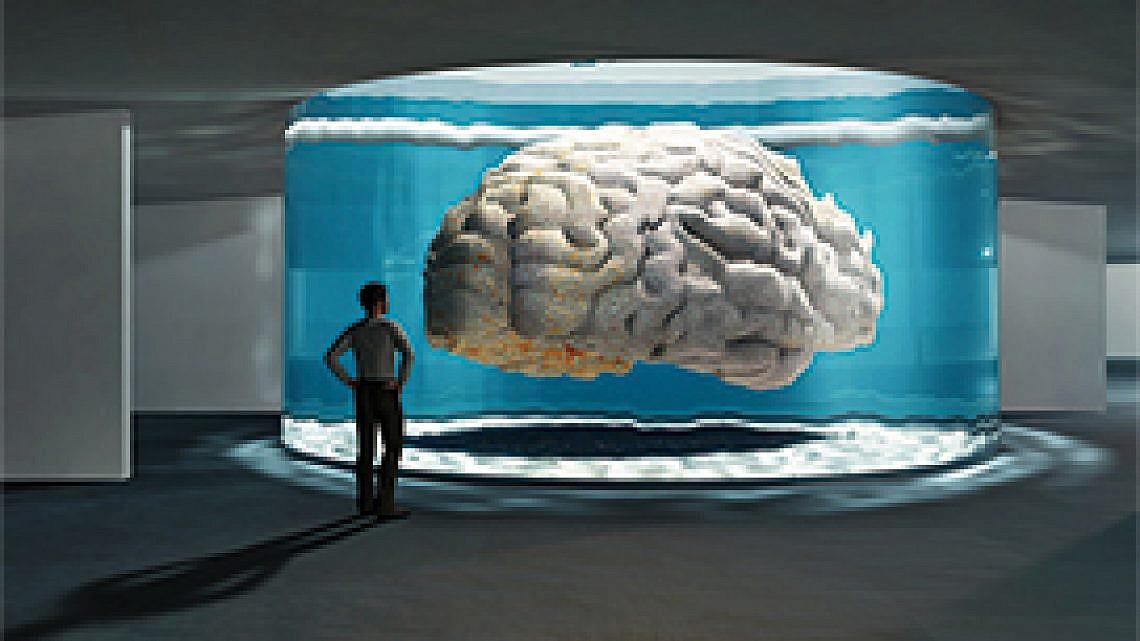 """תערוכת המוח במכון ויצמן. צילום: יח""""צ"""