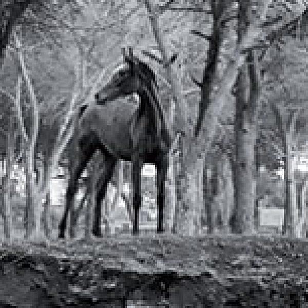 ״איפה אני לעזאזל?״ צילום של רונית פורת, מתוך ״פלסטר 3״