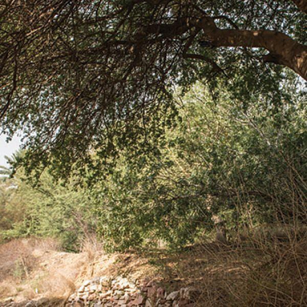 הגן הבוטני בתל אביב (צילום: נמרוד סונדרס)