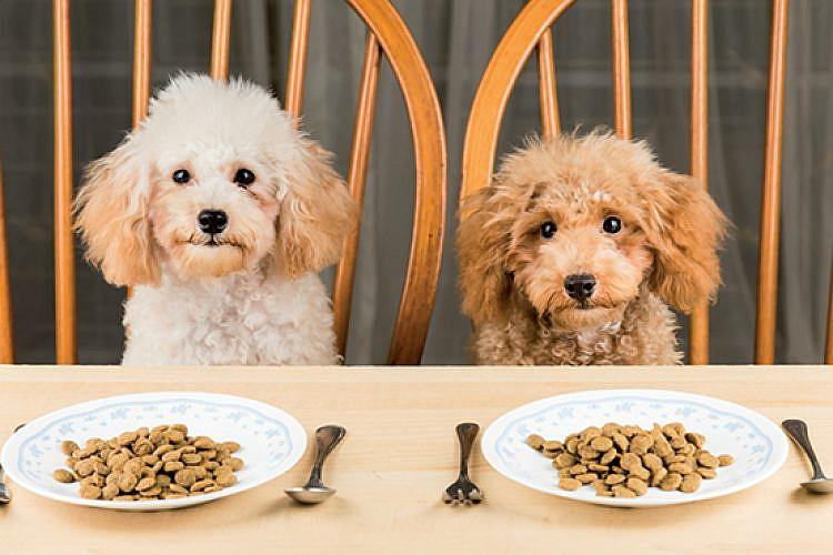 איזה מן כלב אתם? (צילום: shutterstock)