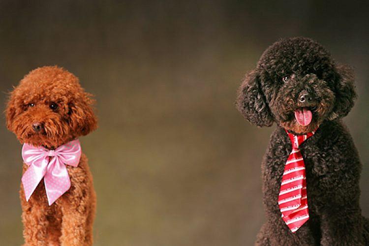 כלבים. צילום: shutterstock