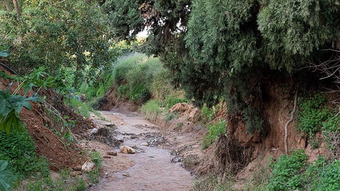נחל פרדסים (צילום: נמרוד סונדרס)