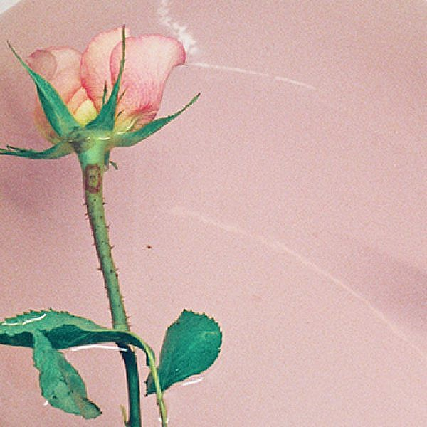 Rose in Bath. מעיין טולדנו