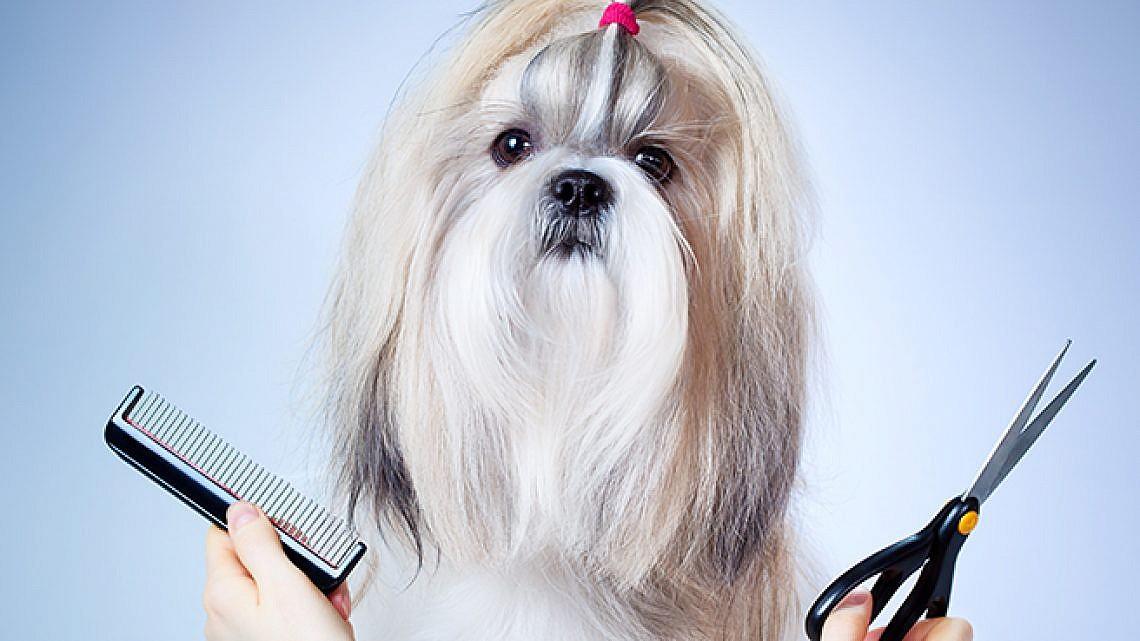 תספורות לכלבים. צילום: Shutterstock