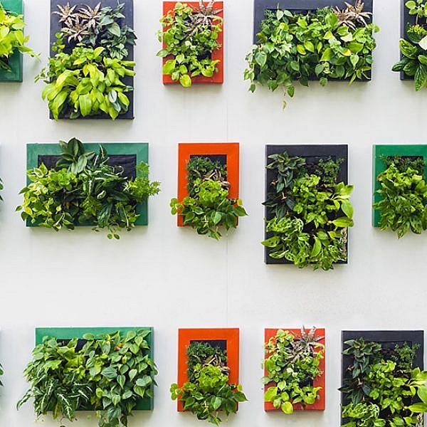 קיר צמחים. צילום: שאטרסטוק