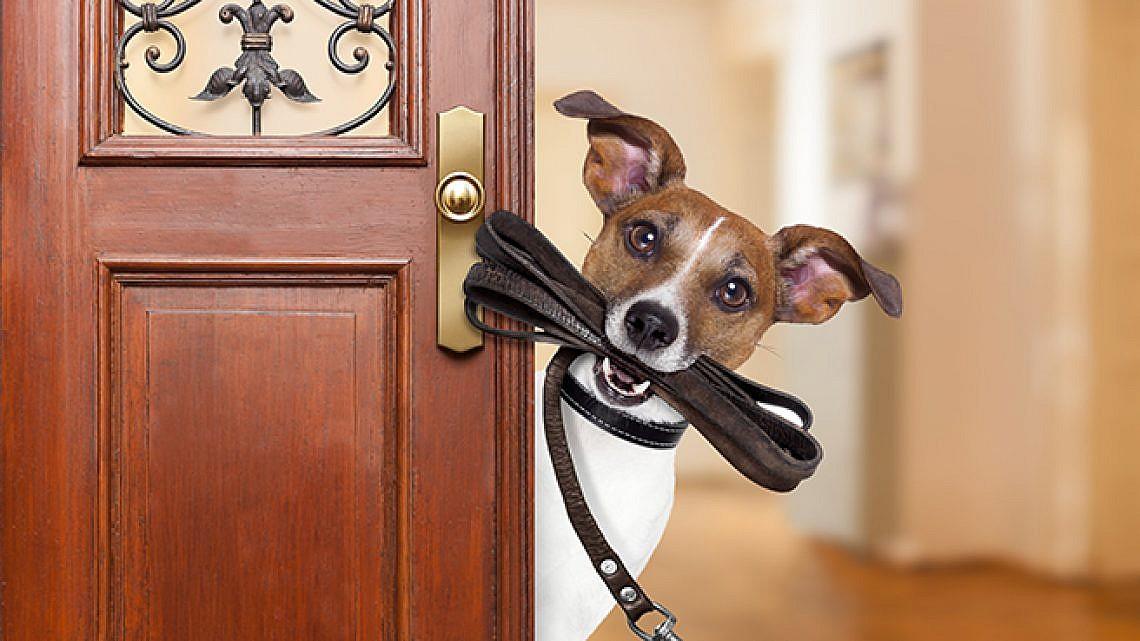 כלב שלא יישכח בבית. צילום: שאטרסטוק