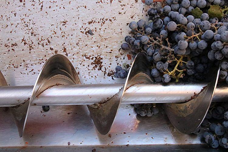 ייצור יין ביקב דרימיה. צילום: נאוה מובשוביץ