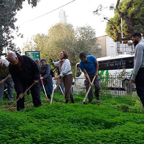 שתילת פקעות וזרעי בר בשכונת יד אליהו. צילום: באדיבות עיריית תל אביב-יפו