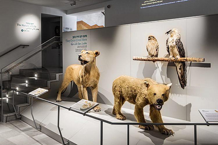 """דב, אריה, אזניה ופרס במוזיאון הטבע ע""""ש שטיינהרדט (צילום: איתי בנית)"""