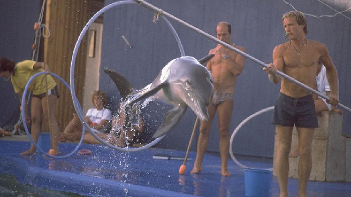 """מופע דולפינים בדולפינריום (צילום: סער יעקב, לע""""מ)"""