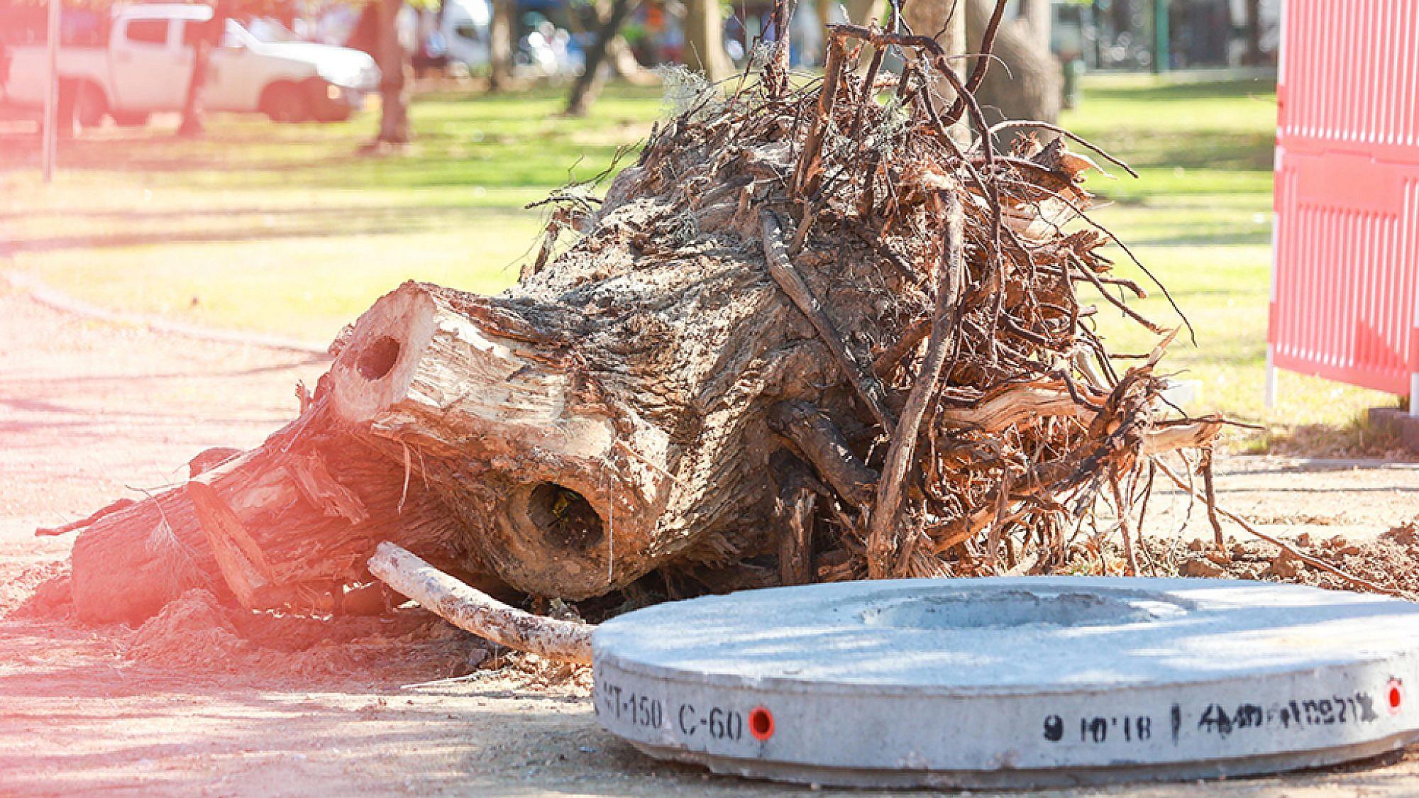 עצים כרותים בגן הכובשים (צילום: שלומי יוסף)