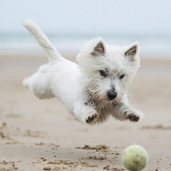 מה צריך לעשות לפני שיוצאים לחופשה עם הכלב? (צילום: Shutterstock)