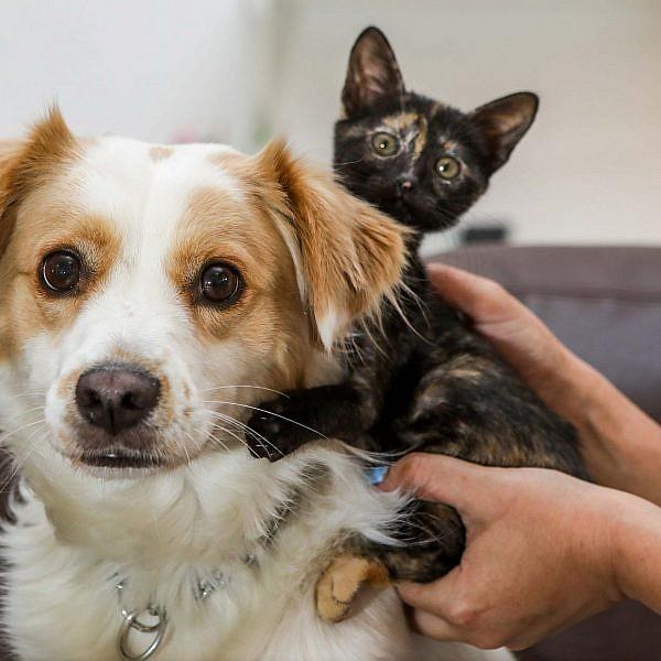 קאליסי החתולה וג'ון סנואו הכלב. צילום: שלומי יוסף