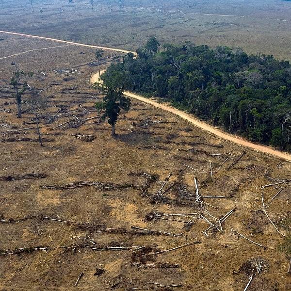 יער באמזונס אחרי שריפה (צילום: Getty Images)