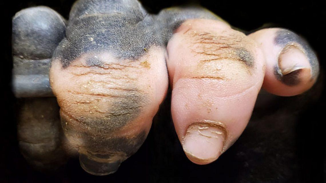 אנושי, אנושי מדי. הגורילה אנקה (צילום: Atlanta Zoo)
