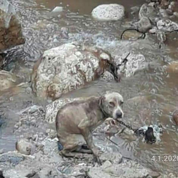 הכלב שנקשר לסלע בסמוך לירכא וטבע למוות