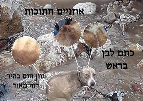 """הכלב שנקשר לסלע בסמוך לירכא וטבע למוות (מתוך הפוסט של עמותת אהב""""ה)"""