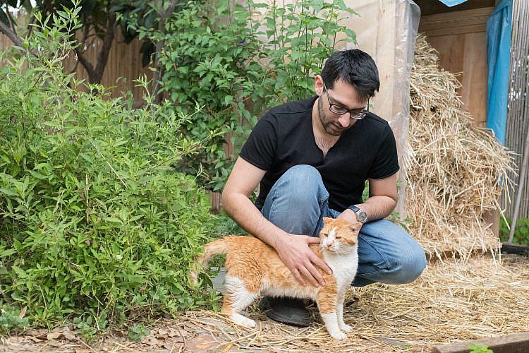 דדי אבידור וג׳ינגס, חתול משוקם