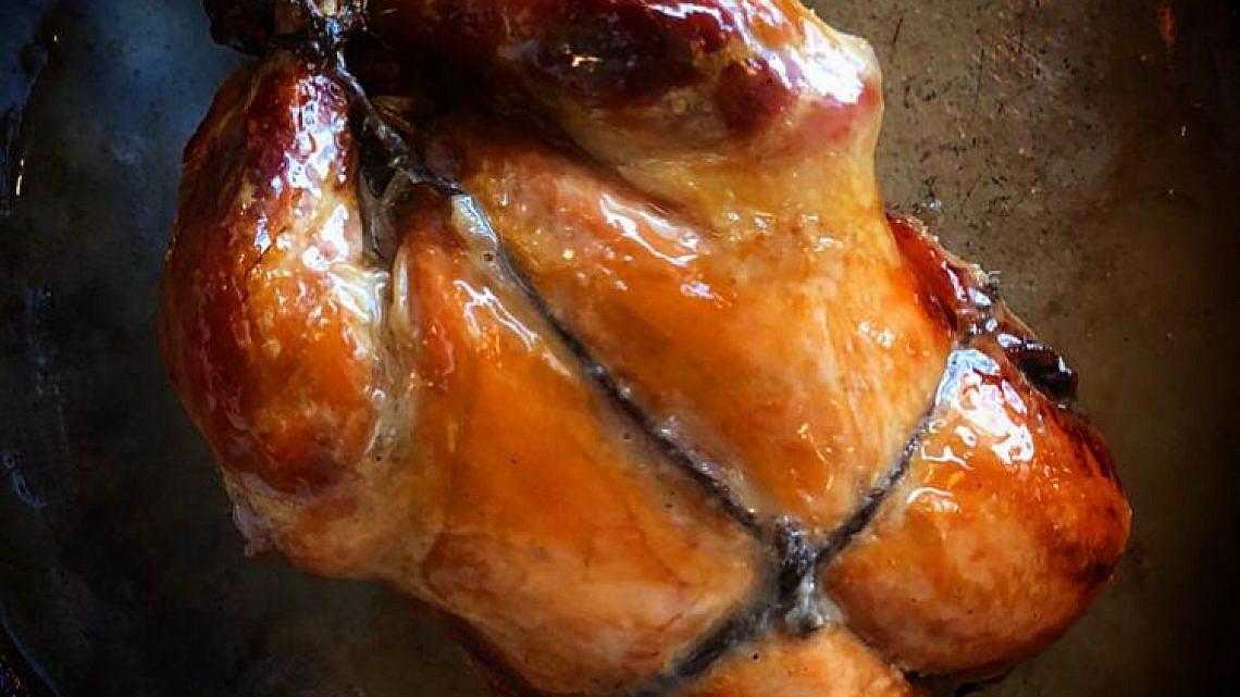 תרנגולת על ספסל (צילום: איל שני)