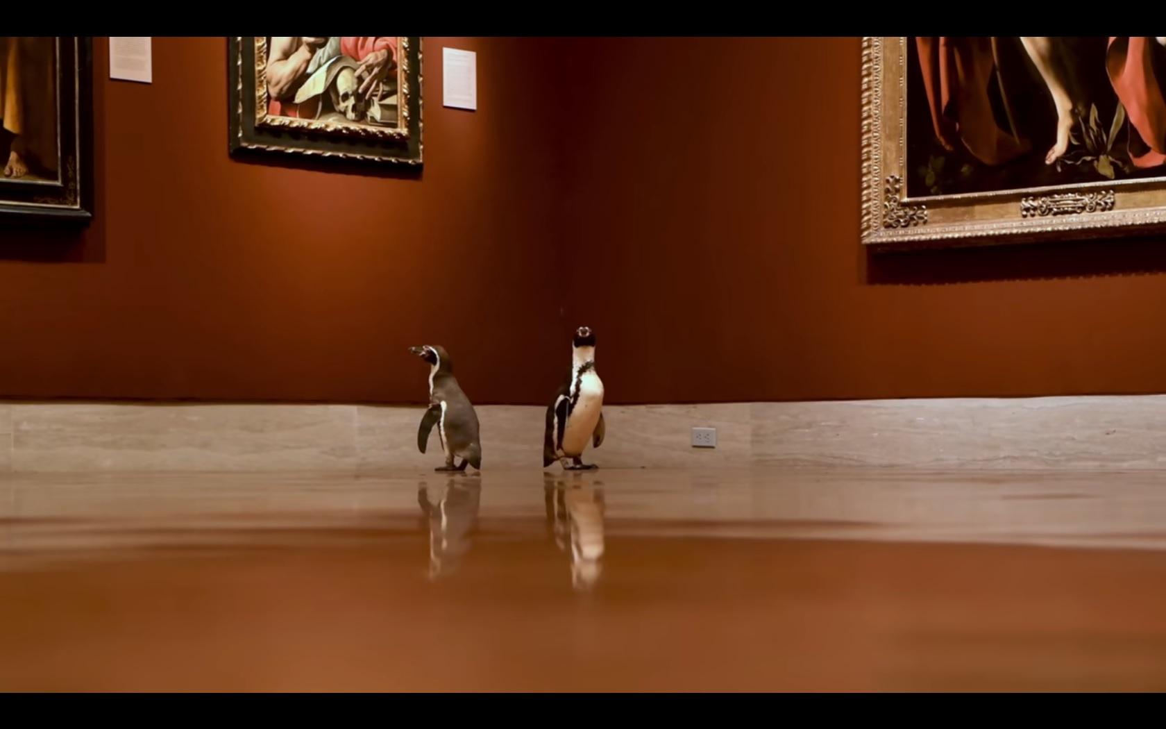 הטבע מתעורר! פינגווינים במוזיאון (צילום: יוטיוב)