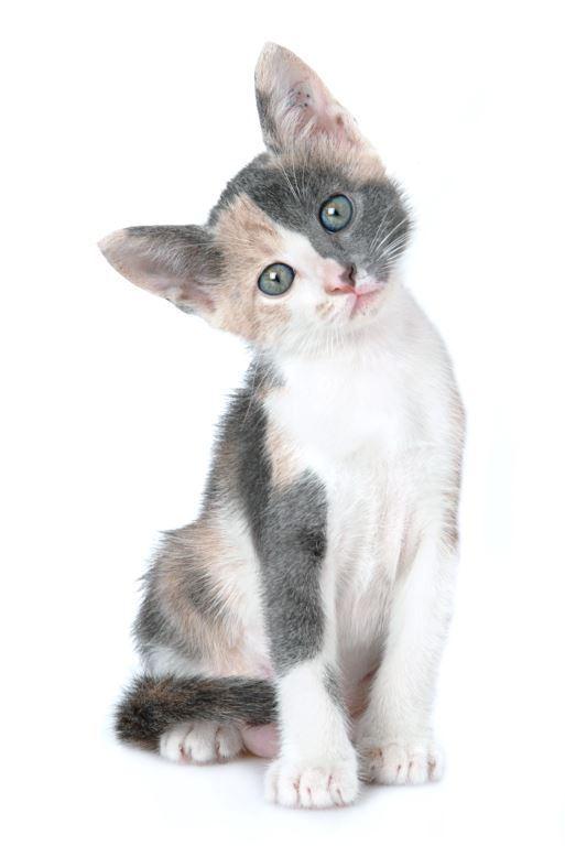 גורי חתולי רחוב אחרי טיפול. צער בעלי חיים (צילומים: חיים שוורצנברג)