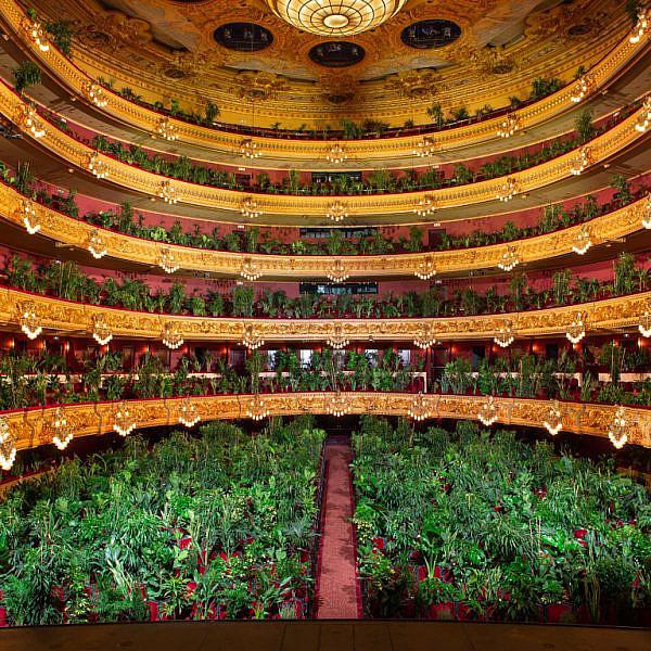 תודה, קורונה. קונצרט ל-2,292 עציצים בבית האופרה בברצלונה