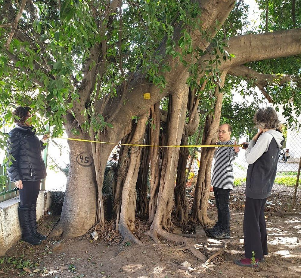 מלחמה על כל עץ. מצילים עץ מכריתה ברחוב ארלוזרוב (צילום: יקיר בן מאור)