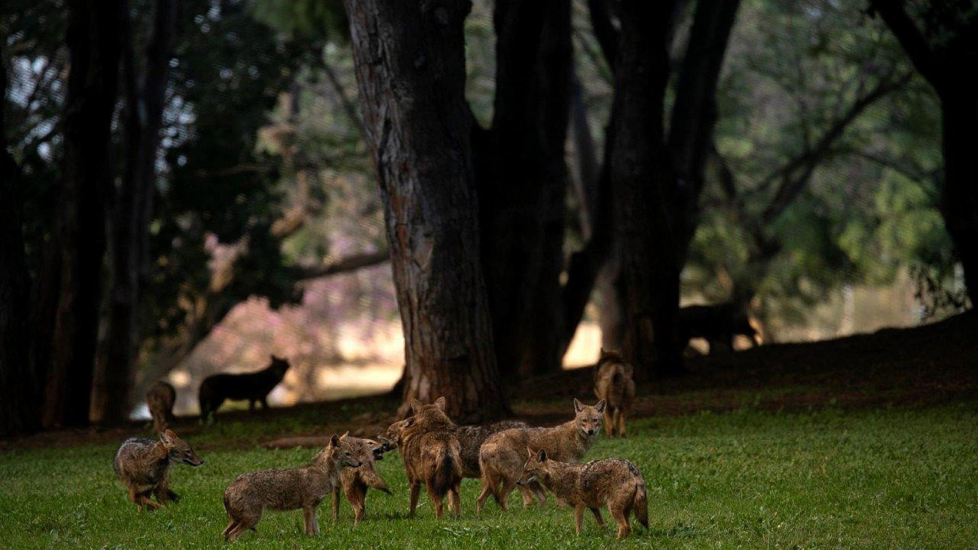 תנים בפארק הירקון. צילום: עופר וקנין