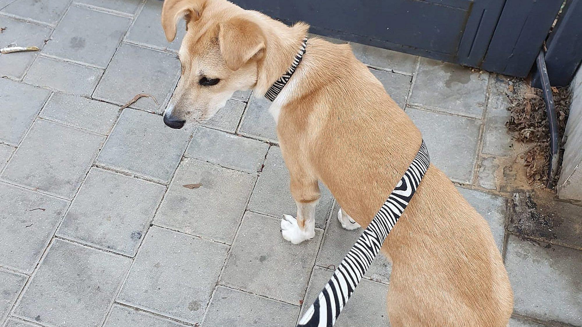 סול, כלבה עירונית. גילוי נאות: בת משפחה של אחד מחברי מערכת טיים אאוט. צילום: טיים אאוט