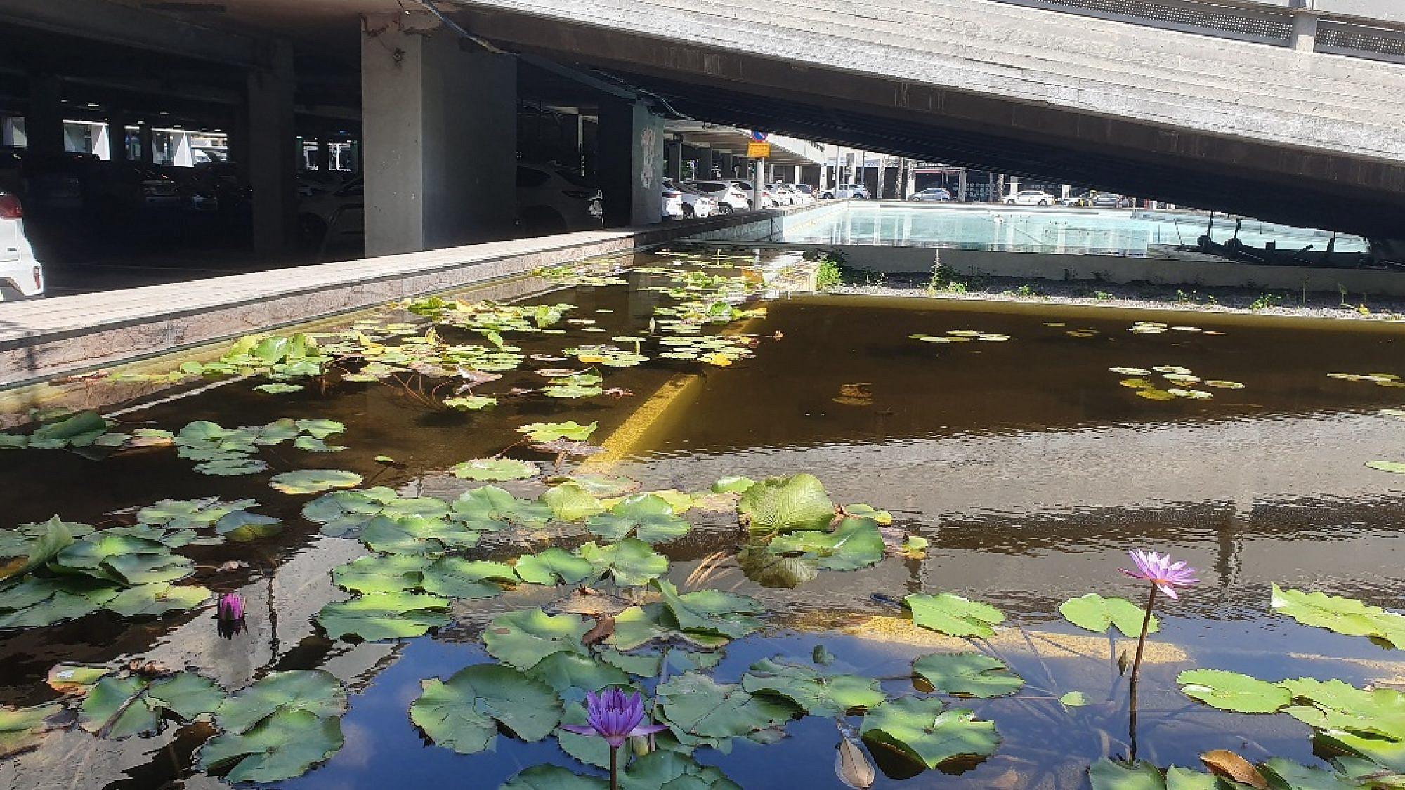 """הבריכה האקולוגית החדשה בכיכר רבין. צילום: עיריית ת""""א-יפו"""