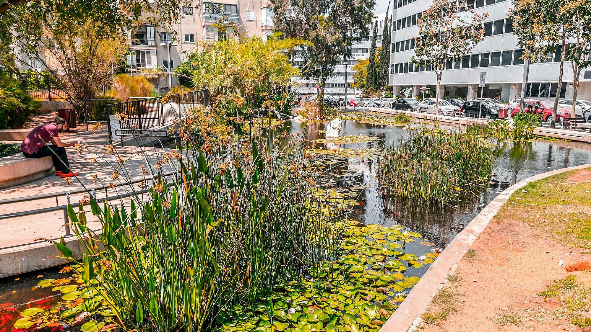 הבריכה האקולוגית בפארק קריית ספר. צילום: shutterstock